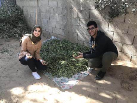 Gaza Olives 2