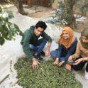 Gaza Olives Cover